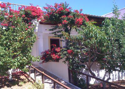 Scarpantos Studios's hibiscus