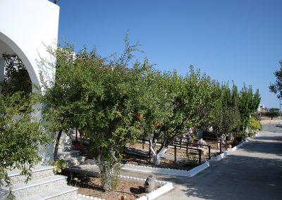 Fruit trees in Skarpantos Studios's garden
